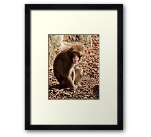 Just Monkeying Around_Launceston Framed Print