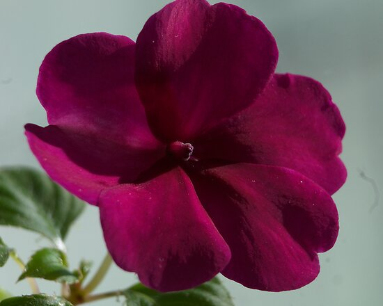 Flower in the Window by Barry Doherty