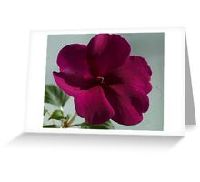 Flower in the Window Greeting Card