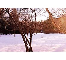 Winter in a Japanese Garden Photographic Print