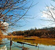 Wetlands by Gordon H Rohrbaugh Jr.