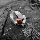 Red ladybird on an empty acorn husk by jorafc