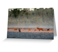 Bellowing stag, New Forest Greeting Card
