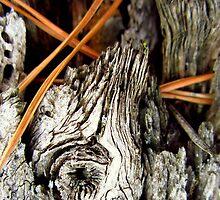 Pine needles in stump by sarahtakespics