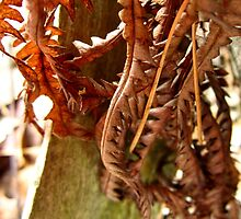 Fern leaves by sarahtakespics