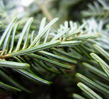 Balsam fir needles by sarahtakespics