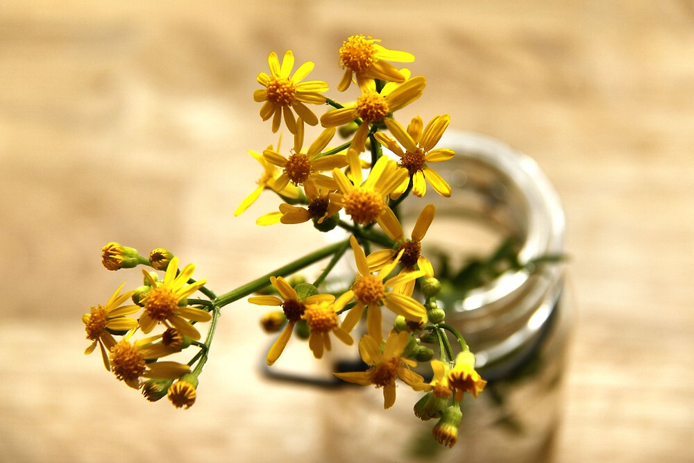 Yellow Wild Flowers by Jay Reed