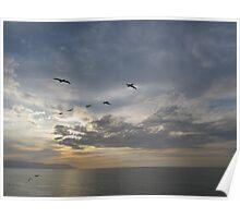 Pelicans high in the Sky in a Line - Pelícanos en Linea Poster