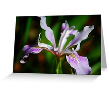 Coast Iris Greeting Card