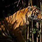 Crouching Tiger by jonlarr31