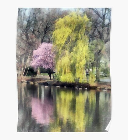 Willow and Cherry by Lake Poster