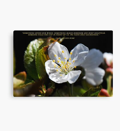 Spring Blossom 2012 10  The Truth Canvas Print