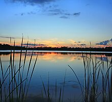 reeds by cliffordc1