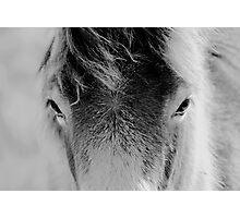 Wild Foal Photographic Print