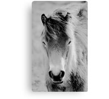 Wild Foal Canvas Print