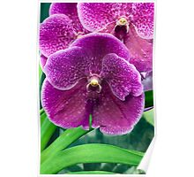 Close-up image of tropical Orchids Poster