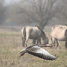 Greylag Goose by Henri Ton