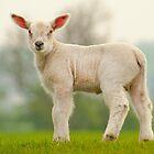Lamb by John Dickson