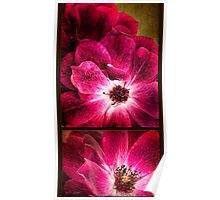 Largo Rose Diptych Poster