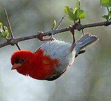 Bird gymnastics-my latest move on the balance beam! by jozi1