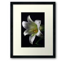 The Easter Lilly Framed Print