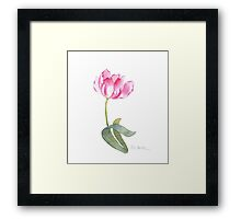Pink Tulip Watercolor Framed Print