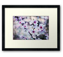 Peach flowers Framed Print