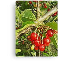 cherry time Canvas Print