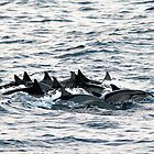 Tight Formation by Chris Snyder