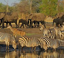 Taking their turn by Explorations Africa Dan MacKenzie