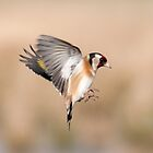 Goldfinch ~In flight by Margaret S Sweeny