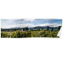 Rippon vineyard, Lake Wanaka Poster