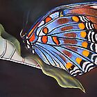 Leaf and Butterfly by Robert Zunikoff