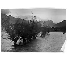 Line of trees, Glenorchy Poster