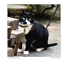 French Quarter Kitty Photographic Print
