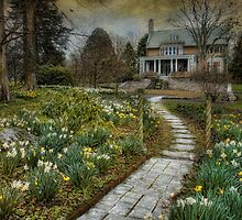 Daffodil Lane by Robin-Lee