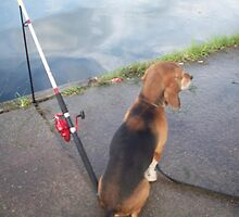 dog gone fishing by awsomepics