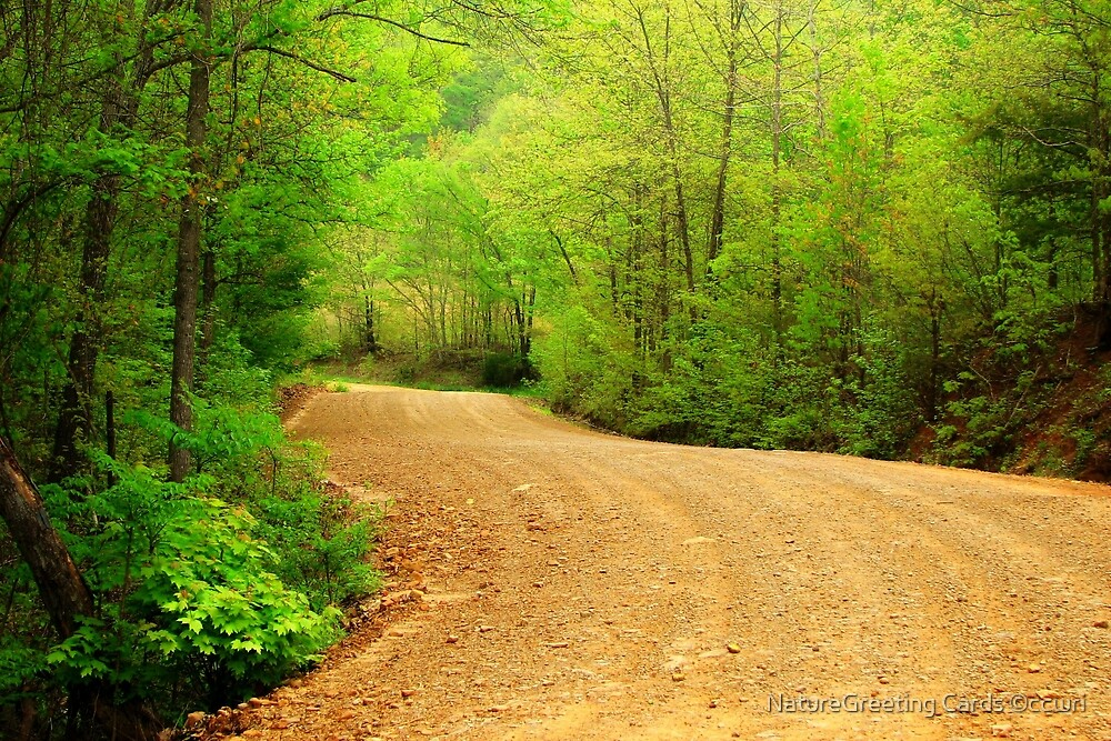 Spring Country Road by NatureGreeting Cards ©ccwri