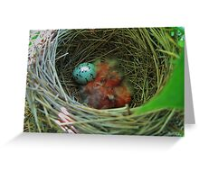 Red-wing Blackbird Babies and Egg Greeting Card