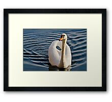Close Front View of Mute Swan in Lake Framed Print