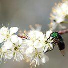 Green-eyed Bee by Beth Mason