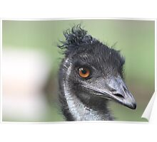 Emu - Keith Poster