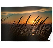 Sunset through tall grass Poster