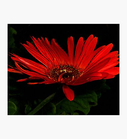 Red Flower Watercolor Photographic Print