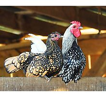 Hen and Rooster Photographic Print