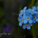 Forget me - not by mishu78