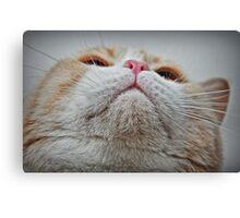 Feline Features Canvas Print