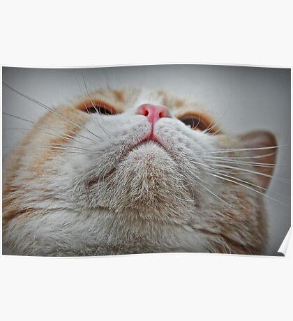 Feline Features Poster