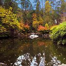 Autumn Moon Over Lithia Park by Diane Schuster