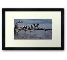 Pelican Squadron Framed Print